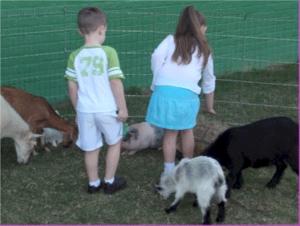 Petting Zoo.gif